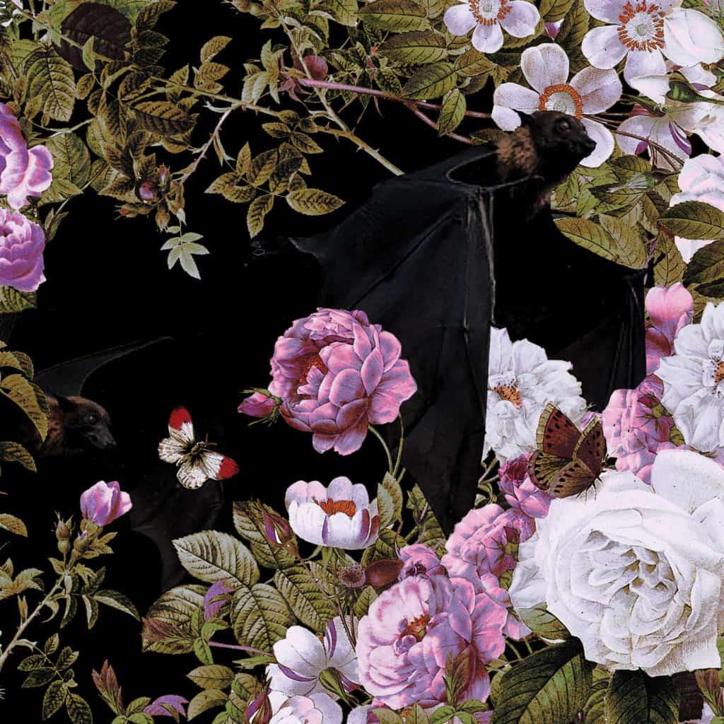 White NIght 36 Pink Edge. Detail